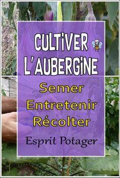 Cultiver l'aubergine : semer, entretenir et récolter Permaculture, Legume Bio, Plantation, Fruit, Green, Gardens, Plants, Potager Garden, Planting Flowers