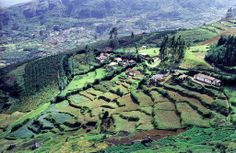 Terrace agriculture, Nilgiri Hills, Tamil Nadu, India - photo by Yvon Maurice