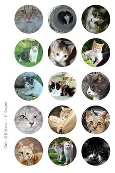 Cats and Kittens Bottle Cap Images - 4 x 6 Digital Collage Sheet - 1 inch Round Circles - INSTANT DOWNLOAD