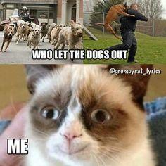 Funny Grumpy Cat!!!