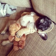 How I sleep #puppiesforall #tagsforlikes #L4L #photooftheday #love