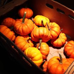 Fall festivities are in full swing. Thanks to Nathaniel for bringing in pumpkins for everyone! #halloween #pumpkins #farm #fall #festivities  Please remember to follow our Instagram! http://instagram.com/cozifamily