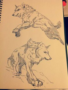 Wolf sketches by WolfSkullJack.deviantart.com on @deviantART