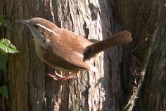 Birds of East Texas | East Texas Piney Woods