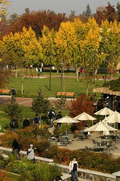 Fall is beautifully showcased at Turlock's CSU Stanislaus Campus