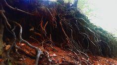 #faded #ağaç #kök #türk #repin #vsco #vscocam #gerçek #dünya #real #world