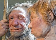 Geneticists find Neanderthals lacked gene preventing them from eating certain protein foods, which they could not chew.  May have led to their extinction. Feb.2, 2015 -    Could Neanderthals have died out in part because they didn't enjoy their carrots and turnips? Geneticists at Pennsylvania State University researc...