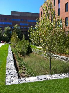 Gabion retaining wall in this swale adds beautiful textural contrast and style to this sustainable design!