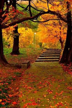 Gardening Autumn - Beautiful autumn - With the arrival of rains and falling temperatures autumn is a perfect opportunity to make new plantations Fall Pictures, Fall Photos, Nature Pictures, Beautiful Places, Beautiful Pictures, Amazing Places, Image Nature, Autumn Scenes, Autumn Aesthetic