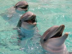Swim with dolphins. Lol I can't swim. Would they save me?