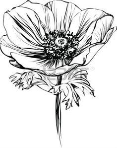 black and white picture poppy flower on the stalk Stock Vector - 10747492