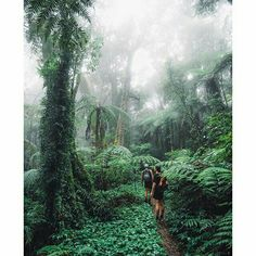 An amazing hike in Queensland, Australia | Photography by @jasoncharleshill #TravLink