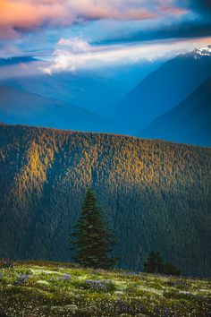 Olympic Mountains - null