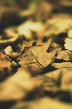 Autumn Leaf Leaves Mobile Wallpaper - Mobiles Wall