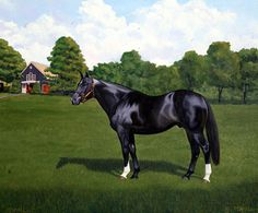 Storm Cat was foaled April 24, 1983. An American thoroughbred stallion who breeding fee was half million dollars. He passed in 2013, leaving a legacy of some of the greatest fillies and colts ever produced in the racing industry.