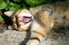 http://de-belles-images.blog4ever.com/blog so...need a nap...