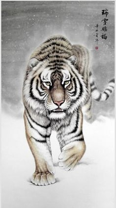 The Year of the Tiger. As one of the most popular symbols of the Chinese Zodiac, the Tiger embodies spontaneous power and action...