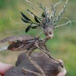 OOAK fairy sculpture by doll artist Kathleen Engelen Woodland Creatures, Magical Creatures, Fantasy Creatures, Wow Art, Fairy Art, Fairy Dolls, Fairy Houses, Fantasy Art, Fantasy Dolls
