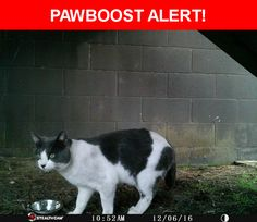 Is this your lost pet? Found in Daly City, CA 94015. Please spread the word so we can find the owner!  Description: Not sure of this cat's gender. It doesn't have its ears tipped- so it looks like it could be someone's pet. It's a black and white cat with black nose.   Nearest Address: Crown Colony Condos - Daly City