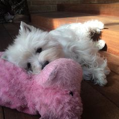 Morning cuddles with hippo! by emma_the_westie