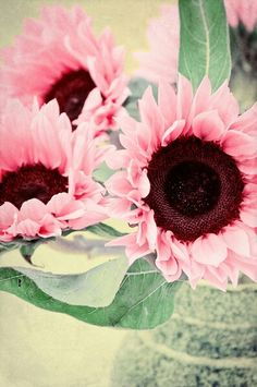 Pink sunflowers, some day they will exsist, hopefully!