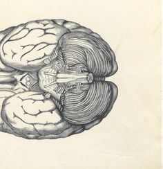 1883 Medical Human Brain anatomy book plate - medical book