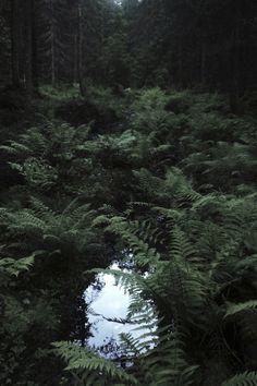 Swamp bog quicksand forest (257)