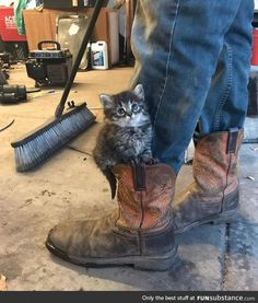 You always need a boot kitten
