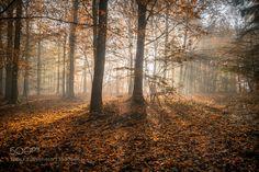 Autumn Morning Sun by heiko-fakesch