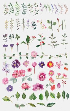 is a great file for who loving flowers and spring like me. With this file you will get 71 handmade watercolor flower illustrations and a custom wreath generator for Photoshop. Flower Wreath Illustration, Illustration Blume, Watercolor Illustration, Watercolour Painting, Floral Watercolor, Flower Illustrations, Watercolor Trees, Watercolor Landscape, Tattoo Watercolor