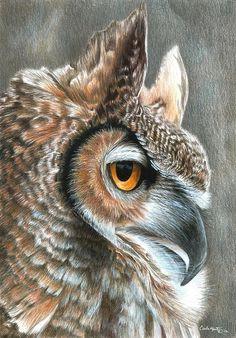 Sepia Owl Painting - Carla Hurt Colored Pencil