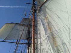 Looking aloft and forward: A majestic view of some of _Pride of Baltimore II_'s sails (a view with which anyone aboard _Kestrel_ would have been familiar). In the foreground is the schooner's mainmast with its huge mainsail; in the background is the foremast, flying the topgallant (top), fore topsail (beneath it), and the stunsail set just to its left.  Photo taken by one of Pride II's captains.