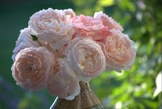 Evelyn Roses- Love these fluffy flowers.