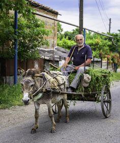 Driver and the donkey by Vladlen Tsiskarishvili on 500px