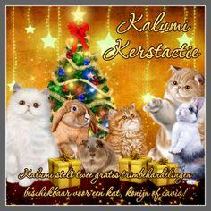 Kalumi stelt twee gratis trimbehandelingen beschikbaar voor een kat, konijn of cavia.