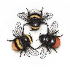 3 Species Bee Triad giclée print pen and ink wall art bees cute summer triangle kitchen art bedroom art gift art print bumble Bumble Bee Tattoo, Bee Drawing, I Love Bees, Bee Art, Insect Art, Nature Tattoos, Bees Knees, Bedroom Art, Art Drawings