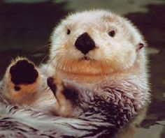 otters! my spirit animal....and camp counselor psydenom