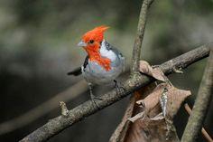 Arrestan a españoles con maleta llena de aves vivas en aeropuerto argentino