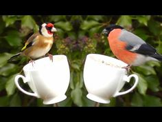 Birds on A Tea Cup Feeder - Relaxing Bird Video and Nature Sounds in HD - Goldfinch and More - YouTube
