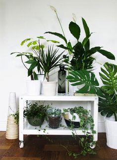 25 Unexpected Ways to Decorate With Plants via Brit + Co.