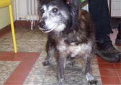 Gevonden ARNHEM 5/7/14  :: Amivedi-Nederland | Stichting voor vermiste en gevonden huisdieren ::