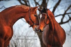 Horses - Rochel And Her Boyfriend by Anette Augestad on 500px