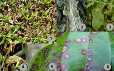 Advice on identifying and avoiding damage by fungi that cause gray leaf spots. Different Plants, Plant Species, Garden Pests, Fungi, Gardening Tips, Advice, Leaves, Gray, Mushrooms