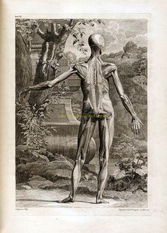 new to site Bernhard Siegfried Albinus 1749i