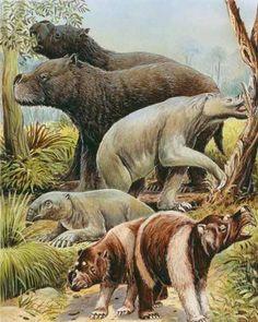 Prehistoric Australia--Look at that enormous wombat