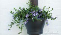 Elho Drainpipe Clicker Planter | Modern planters for contemporary urban gardens