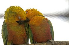 Lovely Bird Pair-Free Bird Images Download Gallery From Bird Photography