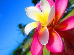 "If someone behaves hurtfully toward you, think of the best ways to behave lovingly toward him.""    —  Paramahansa Yogananda"