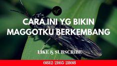 Part2: Bantuan Dana Pengembangan Usaha Budidaya BSF Modern Tanpa Bau Black Soldier Fly, Modern, Movie Posters, Movies, Trendy Tree, Films, Film Poster, Cinema, Movie