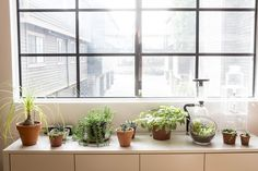 7-foolproof-secrets-to-decorating-with-plants-buffet-table.jpg 3,000×2,000 pixels